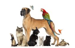 How to Establish a Pet Trust